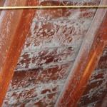Schimmelpilze an Dachschalungsbrettern